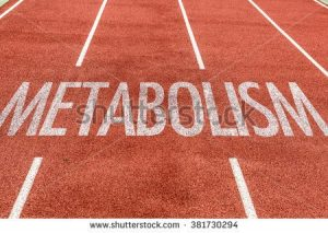 preworkouts and metabolism