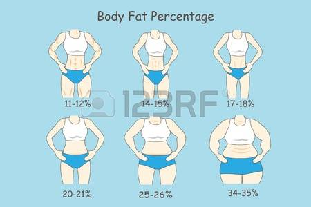 body fat percentage during bulking